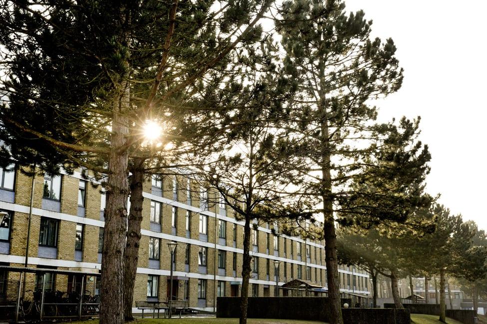 Sommeraktiviteter i Odense - Fyns Almennyttige Boligselskab